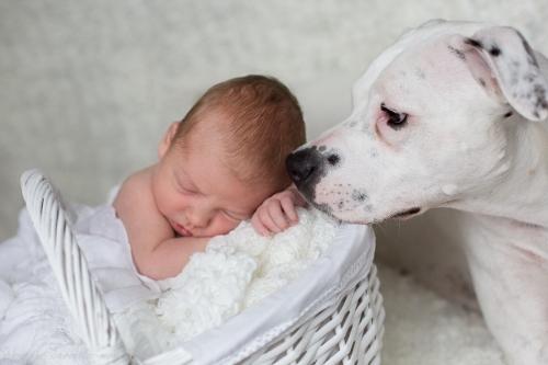 Neugeborenenbilder mit Hund-2