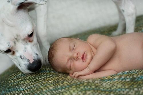 Neugeborenenbilder mit Hund-22