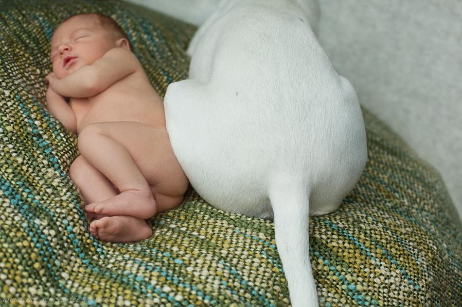 Neugeborenenbilder mit Hund-25