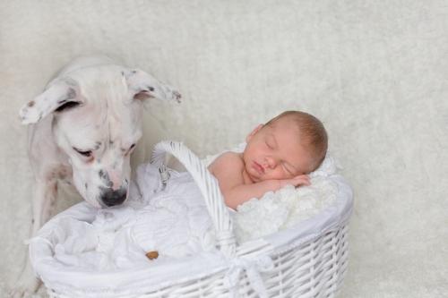Neugeborenenbilder mit Hund-5