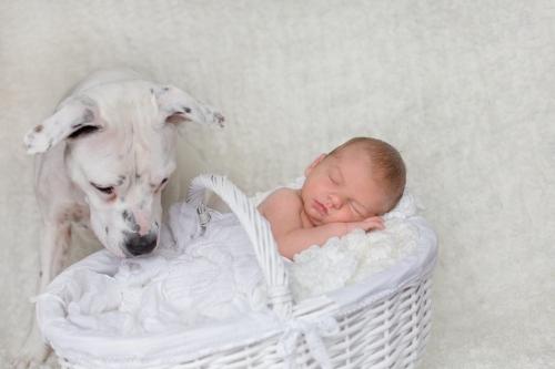 Neugeborenenbilder mit Hund-6