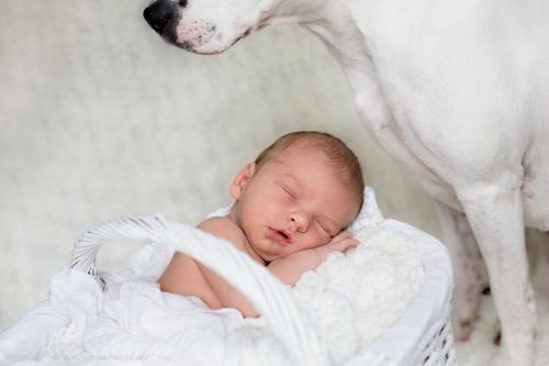 Neugeborenenbilder mit Hund-8