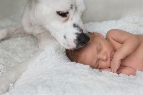 Neugeborenenbilder mit Hund-9