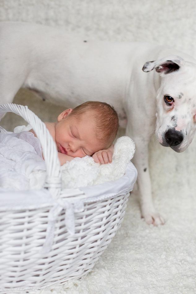 Neugeborenenbilder mit Hund