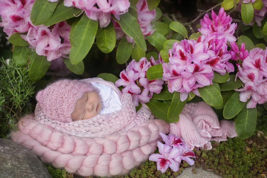 neugeborenenfotos outdoor mai buxtehude