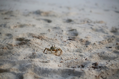 Reisefotografie Malediven 2015 Robinson-19