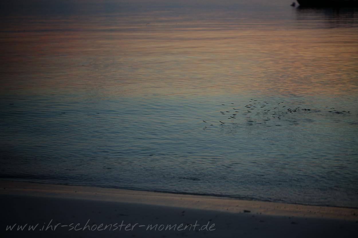 Reisefotografie Malediven 2015 Robinson-20