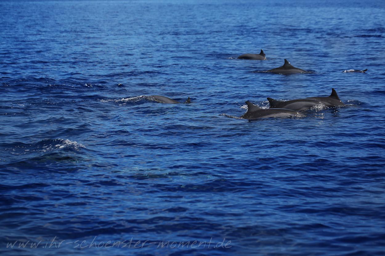 Reisefotografie Malediven 2015 Robinson-35