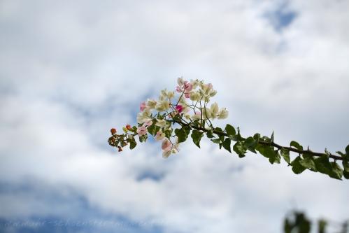 malediven-2015_7