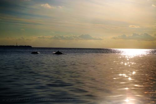 malediven-2015_delphine